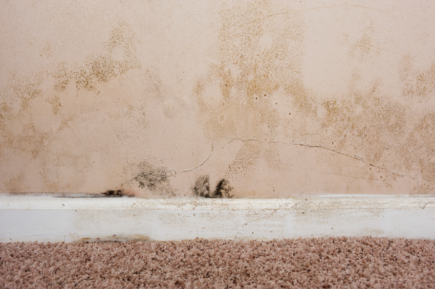 skirting board rot
