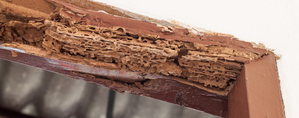 Timber beam of door damaged by termite