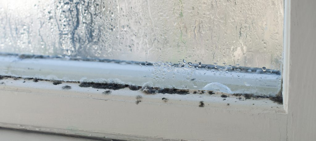 mold on winter window